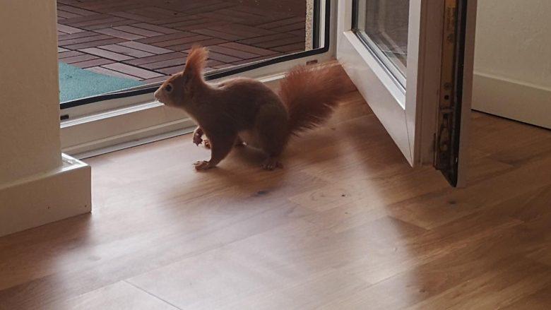 Besuch von einem Eichhörnchen